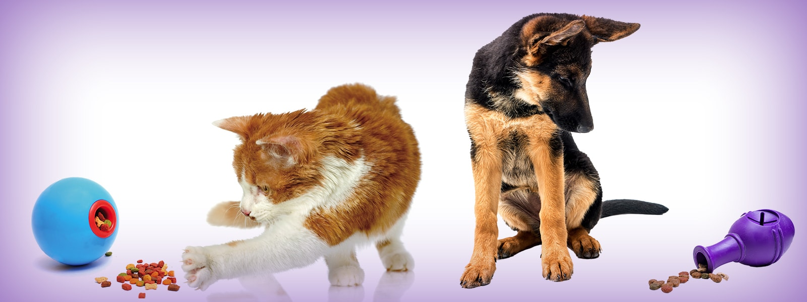 Feeding Puzzles for Dogs and Cats Help Boost Nutrition and Enrichment