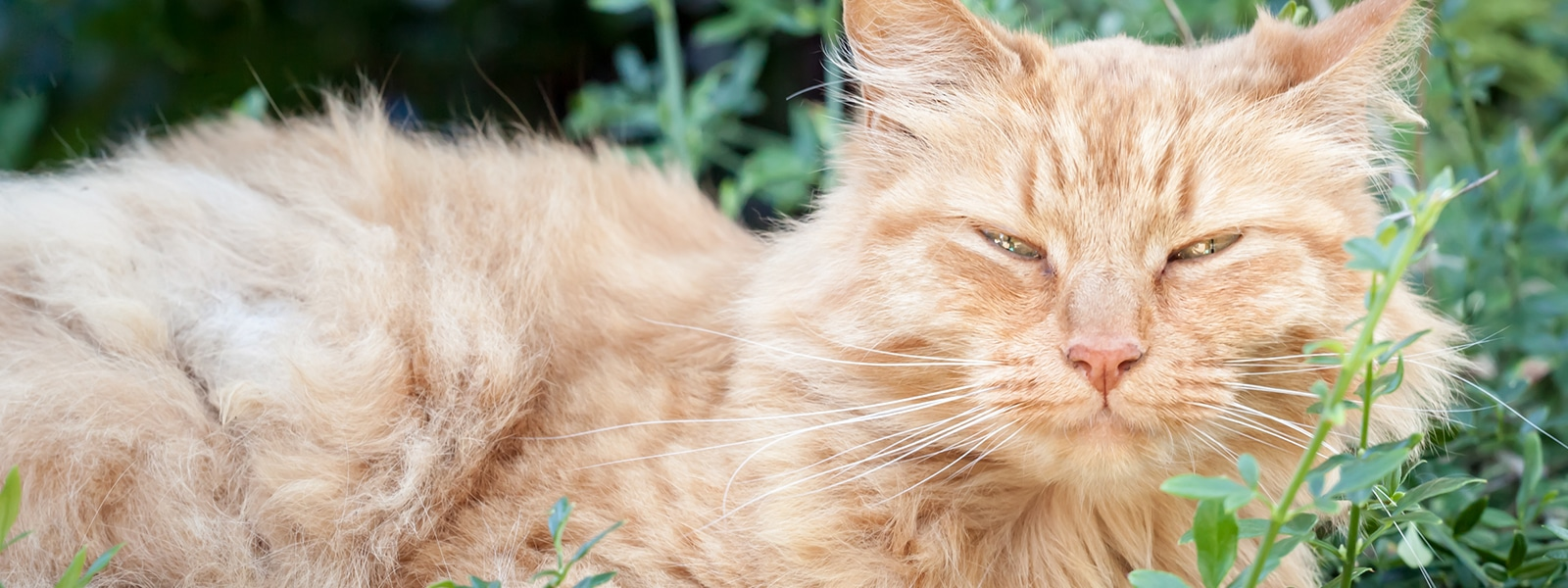 Behavioral Aspects of Caring for Elderly Cats