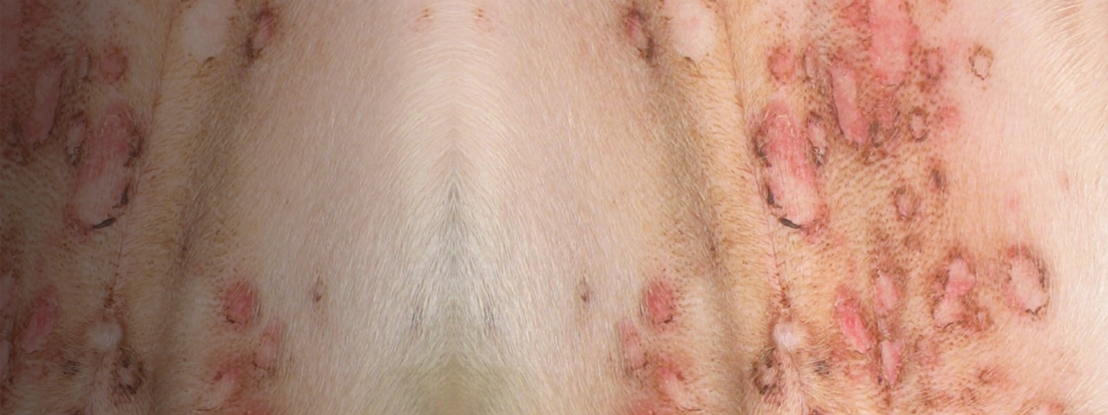 How to Recognize Autoimmune Skin Disease: Tips for Spotting Pemphigus Foliaceus
