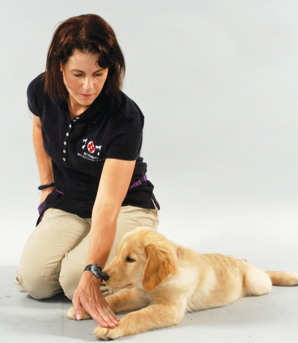 FIGURE 3. Person briefly touches the puppy's foot.