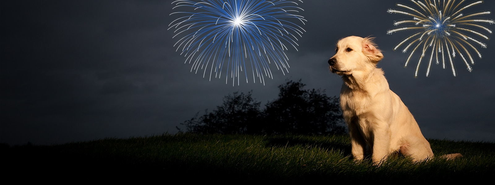 Structuring a Course for Dogs with Fireworks Anxiety