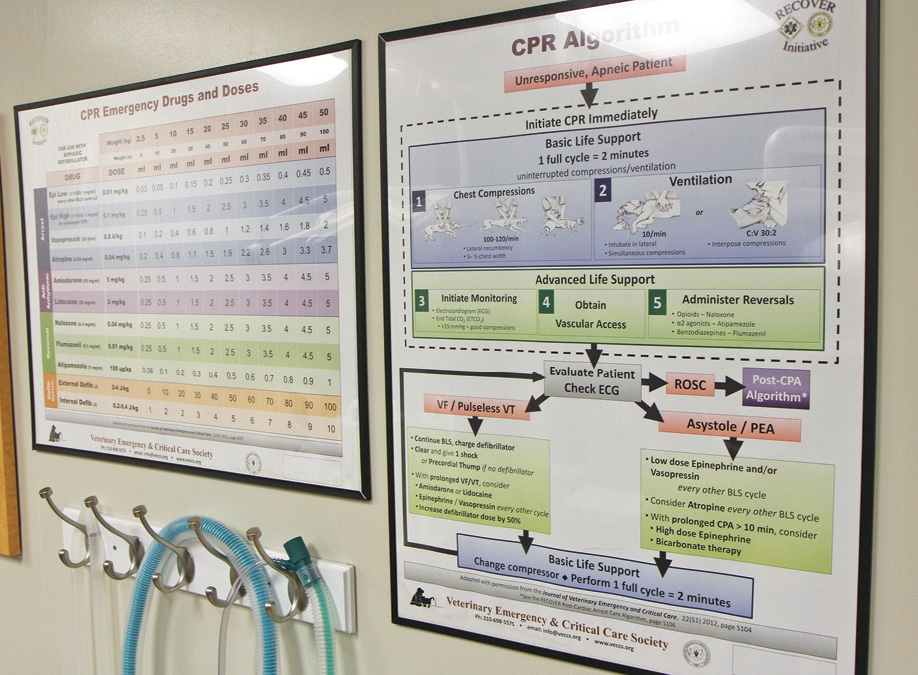 FIGURE 2. Large cognitive aids posted in the emergency area can improve the efficiency of and consistent adherence to guidelines by the CPR team.