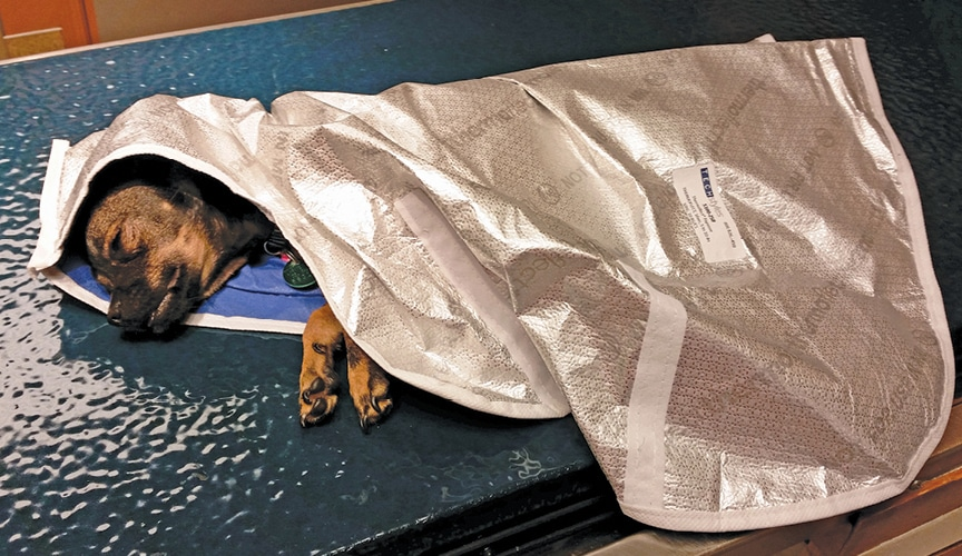 FIGURE 11. Space blanket type blanket. Image courtesy of Jorvet.
