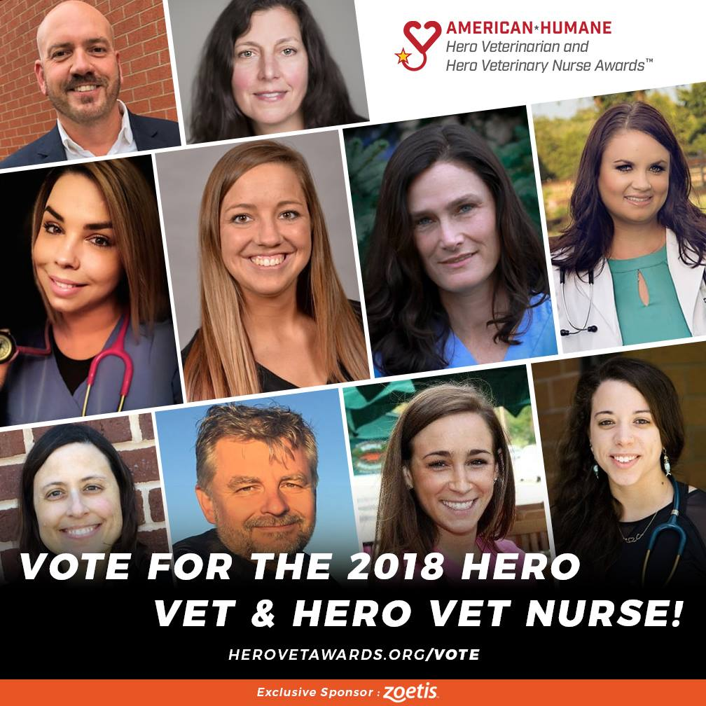 Nominees Announced for the 2018 American Humane Hero Veterinary Nurse Awards