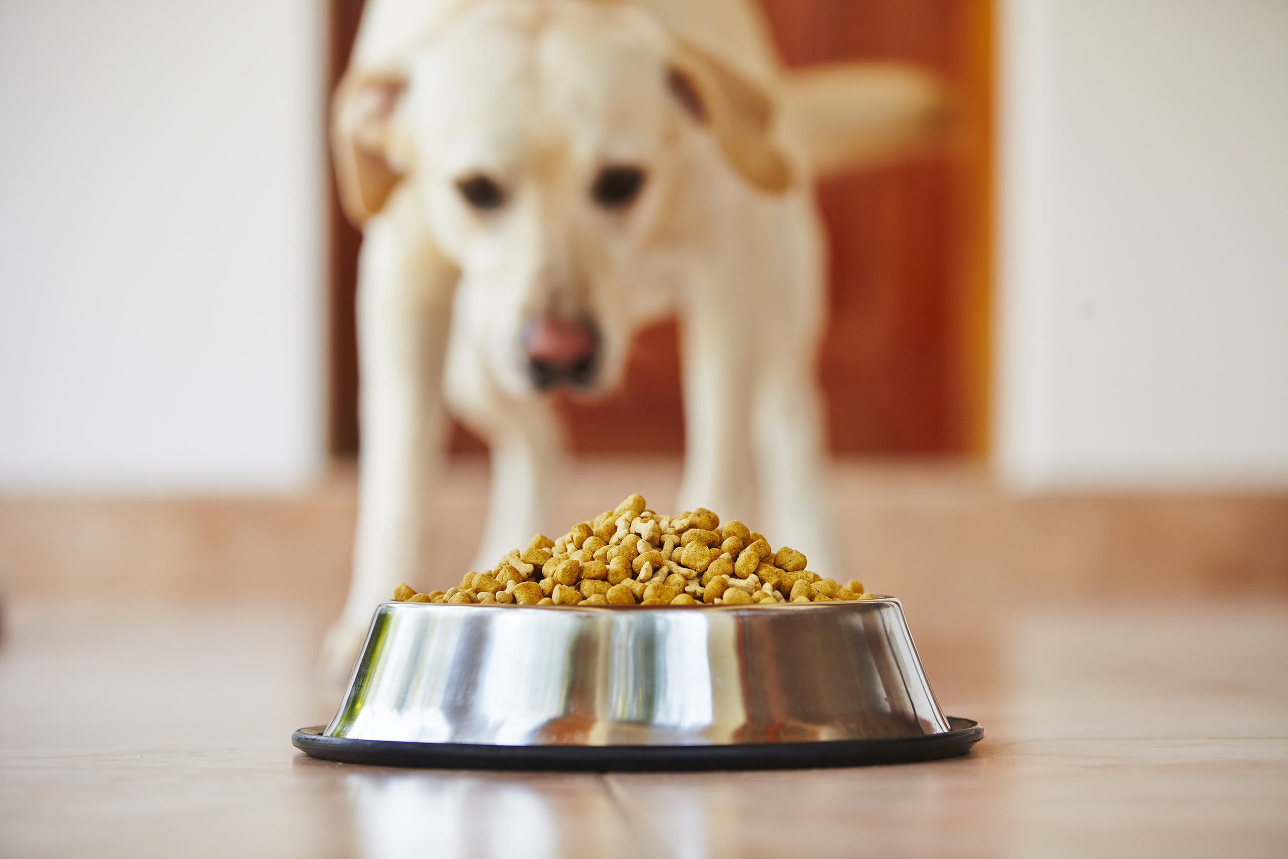 Report From CDC: Salmonella Outbreak May Include Pet Food