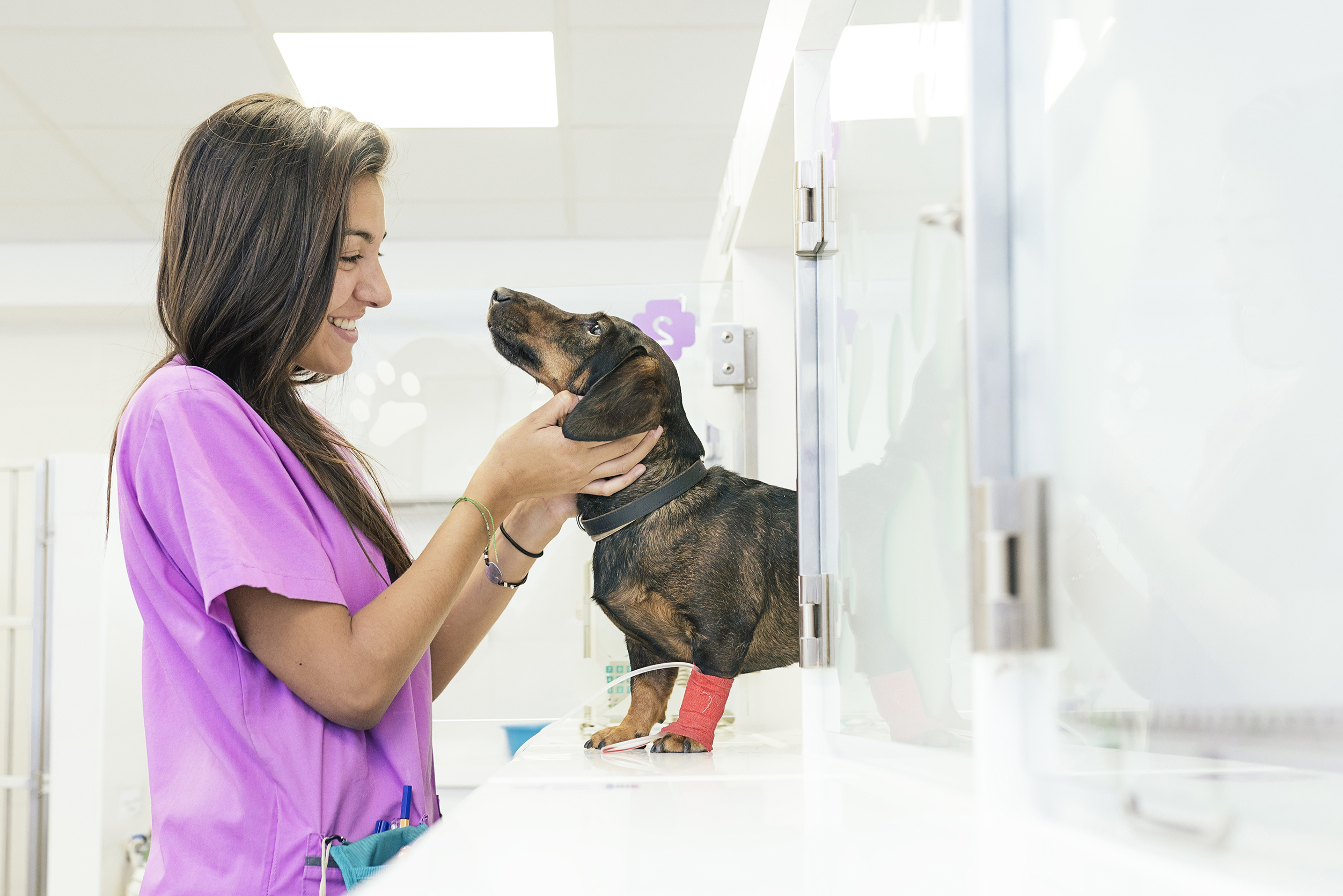 Compassion-First Drives Career Growth for Non-Credentialed Veterinary Technicians and Assistants