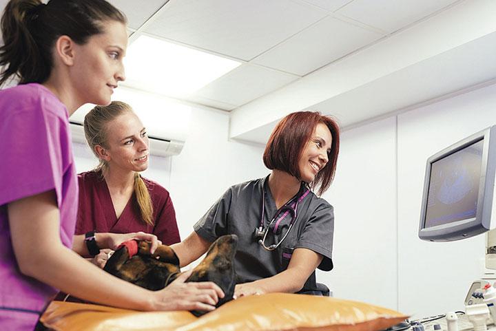 Veterinary Groups Push for Standardizing Licensing