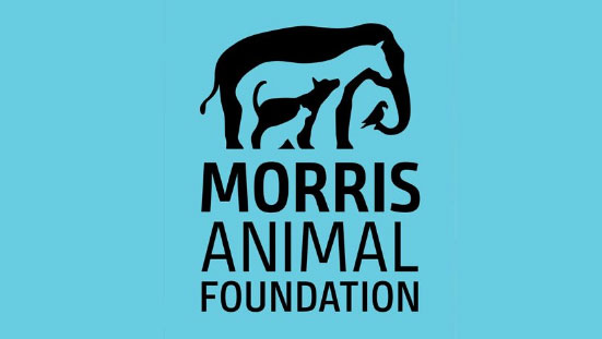 Morris Animal Foundation Awards $1 Million for New Studies Benefiting Canine and Feline Health