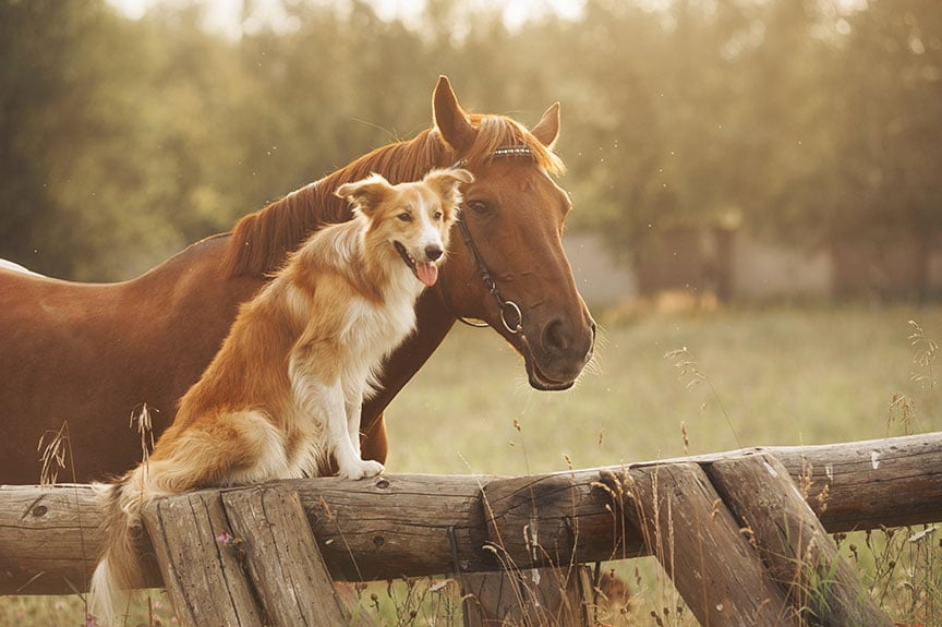 cancer research for dogs and horses