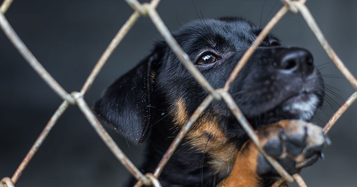 California Bans Commercially Bred Dogs and Cats