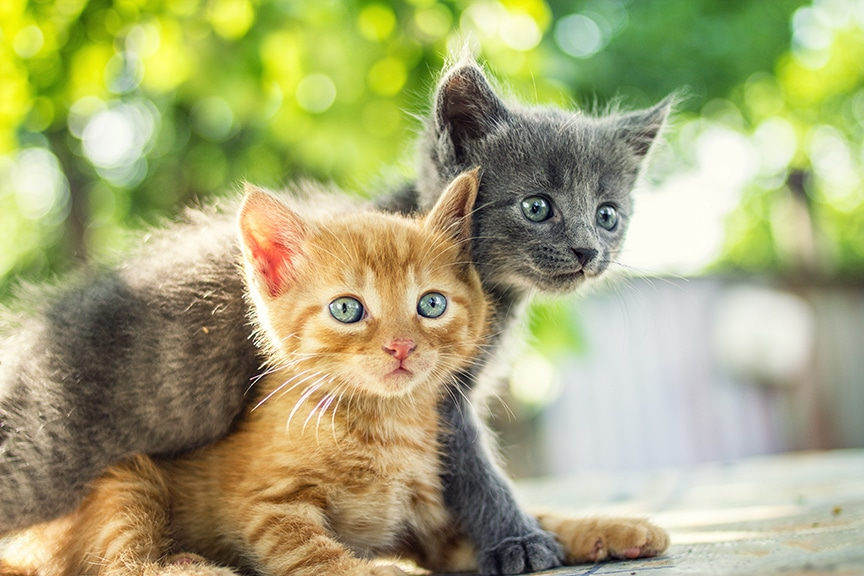 ARS Announces Toxoplasmosis Research Review, Discontinues Research with Cats