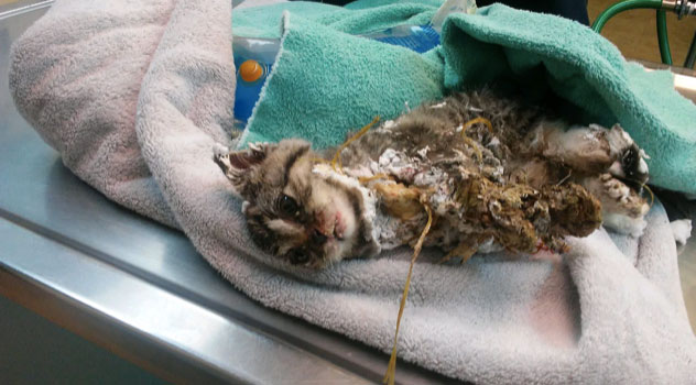 Garbage Collector Rescues Kitten Encased in Spray Foam in Trash