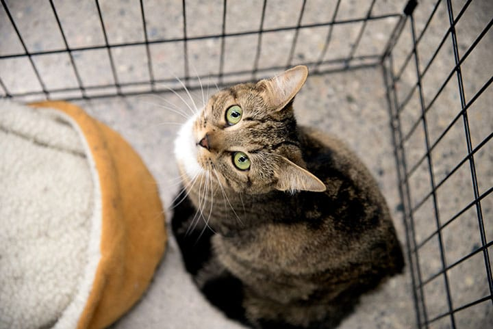 Adopt A Shelter Cat and Tips for Feline Visits