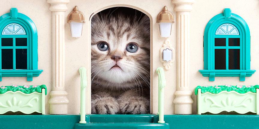 cat-friendly housing cities