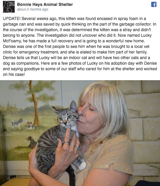 kitten finds forever home