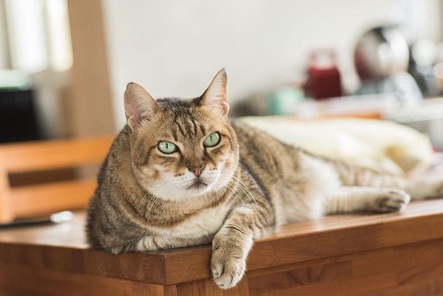 Study: How Cats' Weights Change Over Time
