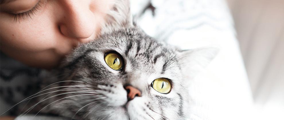 feline zoonoses guidelines