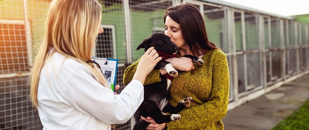 Poll: Do You Participate in Veterinary Volunteer Work?