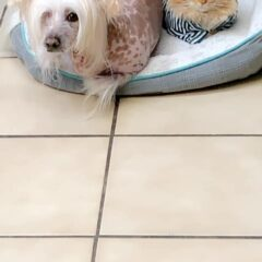 """My dog comes to work every day. This is him and the clinic cat."""