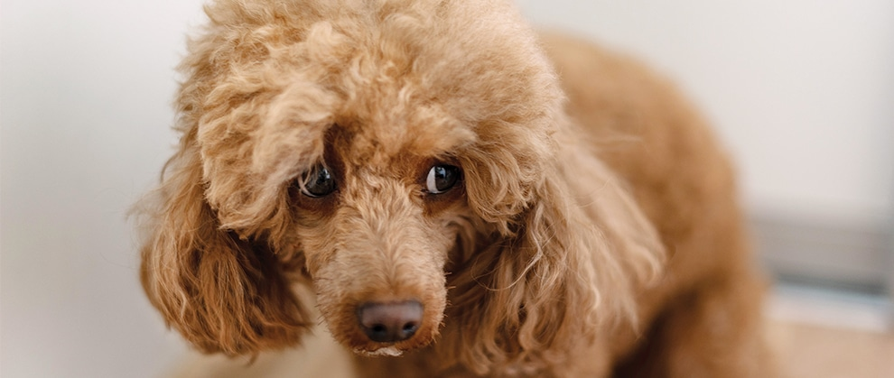Diets and Dietary Supplements for Anxiety in Dogs