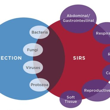 Figure 1. Systemic inflammatory response syndrome (SIRS) and sepsis are dysregulated inflammatory states that affect the whole body. The cause of SIRS may be an infectious or noninfectious insult; when the cause is an infectious agent, the specific inflammatory response is described as sepsis. Most infections do not lead to sepsis. Bacteria are the most common cause of sepsis, but any type of infectious agent can be involved. Noninfectious conditions affecting a variety of organ systems (e.g., abdominal/gastrointestinal, lungs, urinary tract, heart, reproductive organs) can be implicated in SIRS.