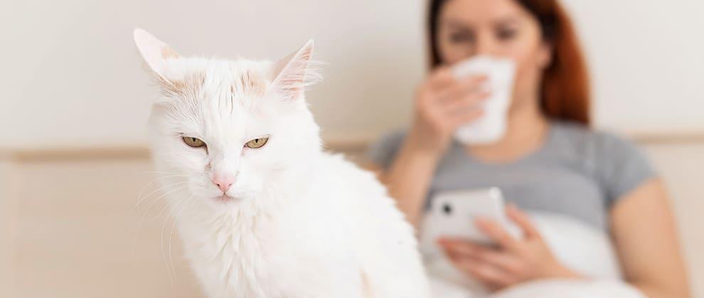 cats coronavirus test