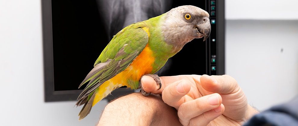 Making Veterinary Care for Birds Fear Free