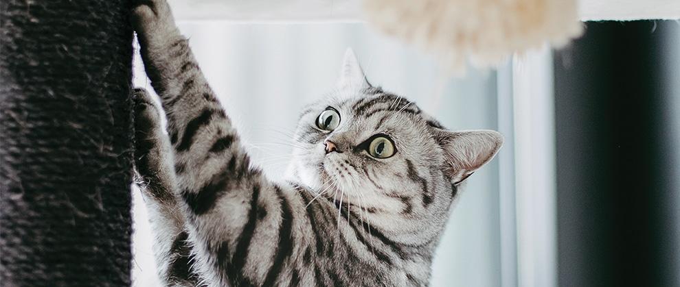 Addressing Feline Behavioral Issues