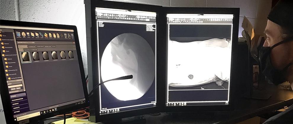 Fluoroscopy: Don't Miss the Show!