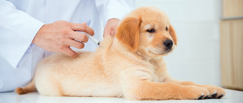 Rabies Vaccination for Dogs