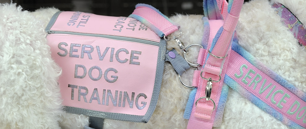 Working With Service Dogs