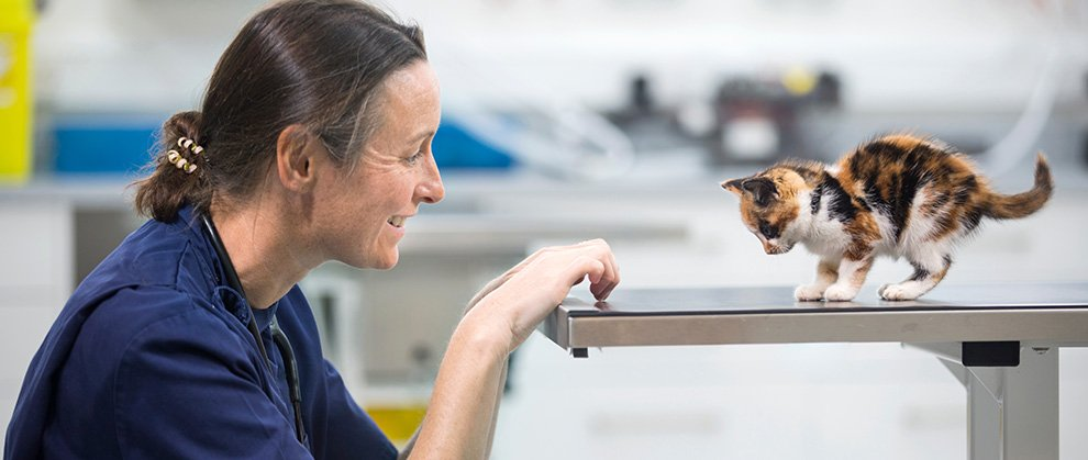 NAVC to Host First Annual Global Veterinary Nurse Virtual Summit October 16-17