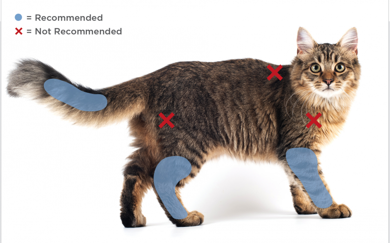 FIGURE 1. Feline vaccination sites from the 2020 AAHA/AAFP Feline Vaccination Guidelines.8